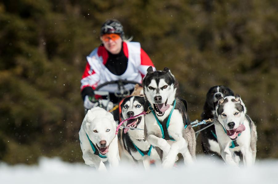 Hundeschlittenrennen-8151