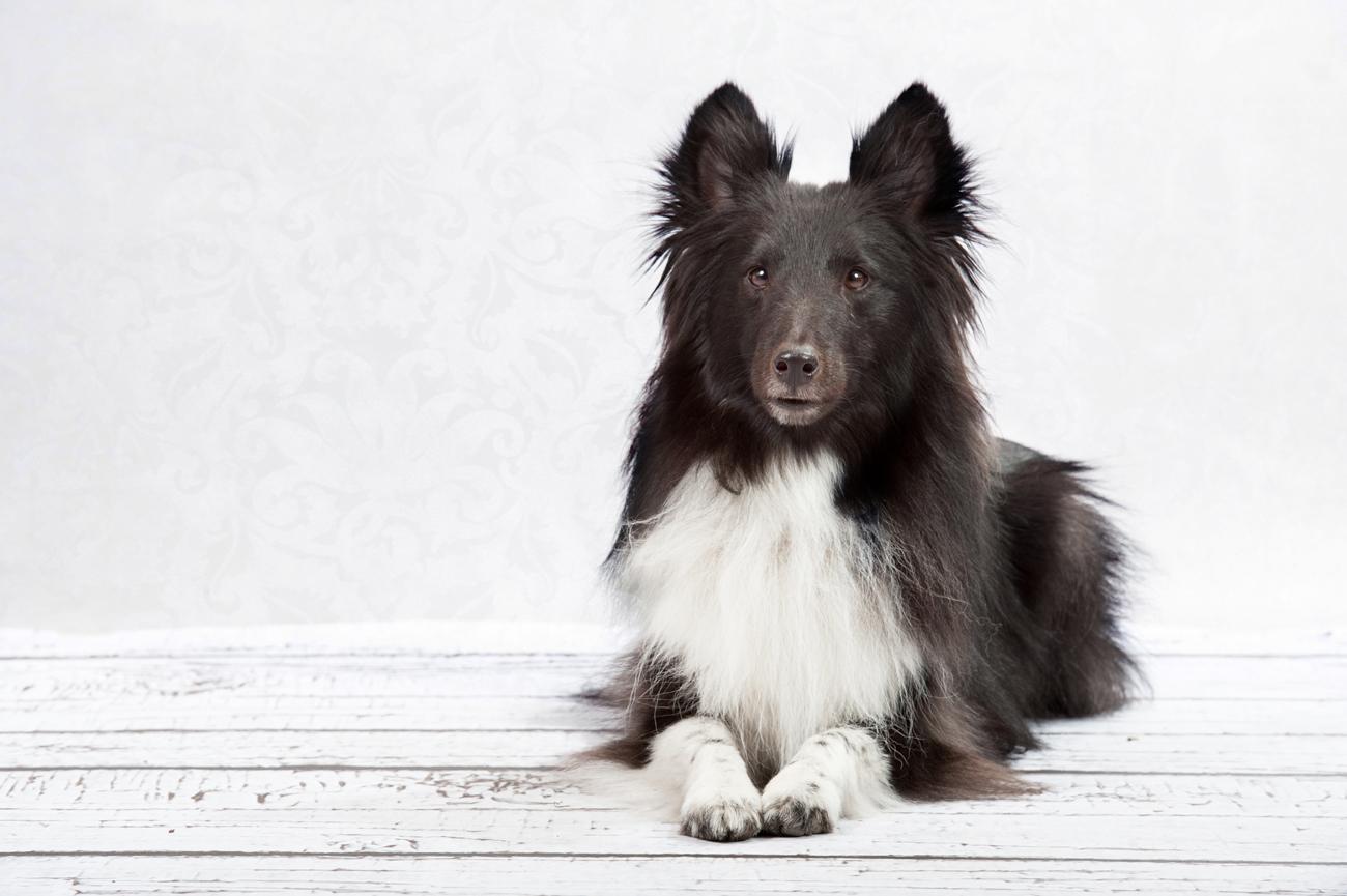 Hunde-1470