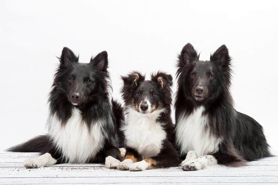 Hunde-1501