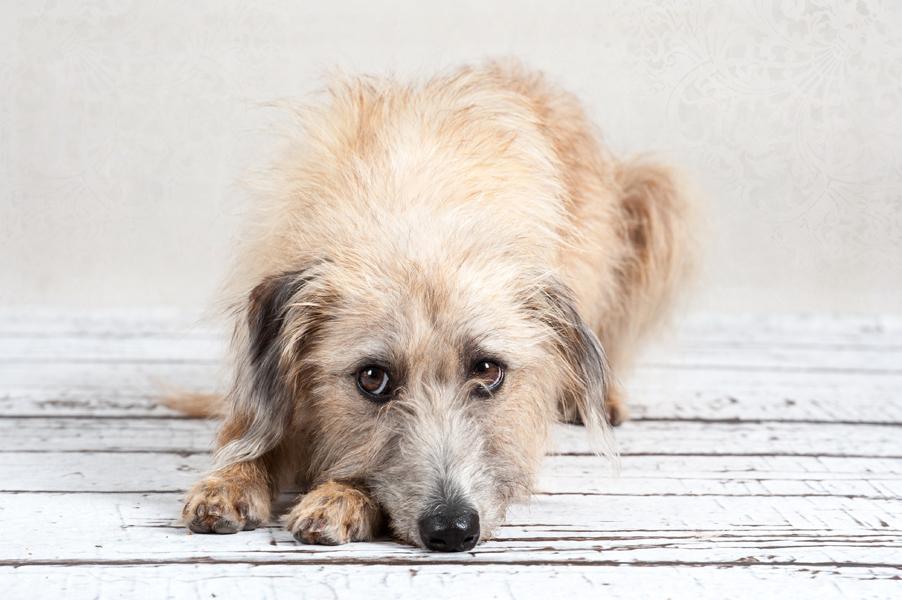 Hunde-4637