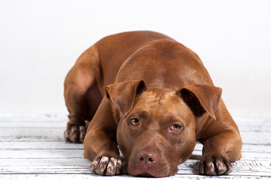 Hunde-4669