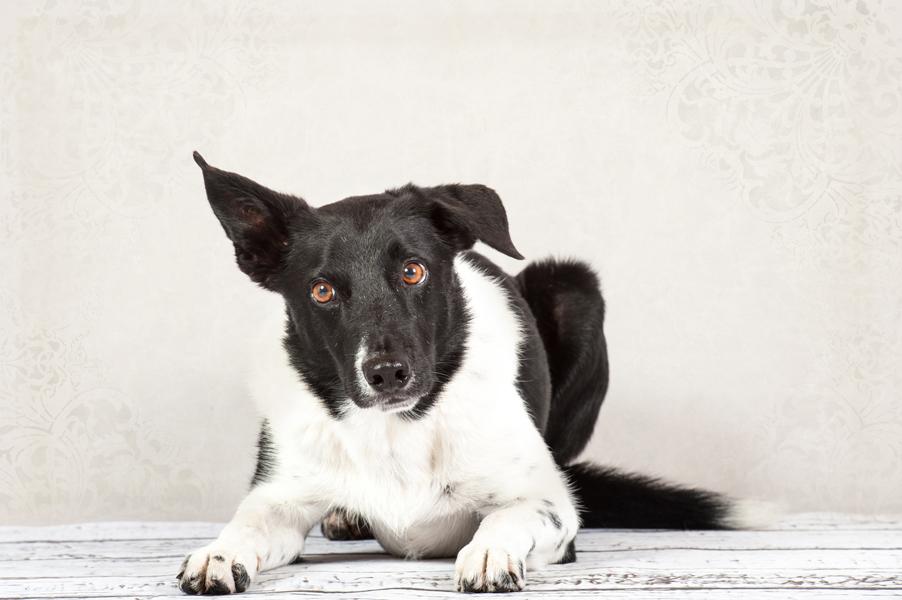 Hunde-6739