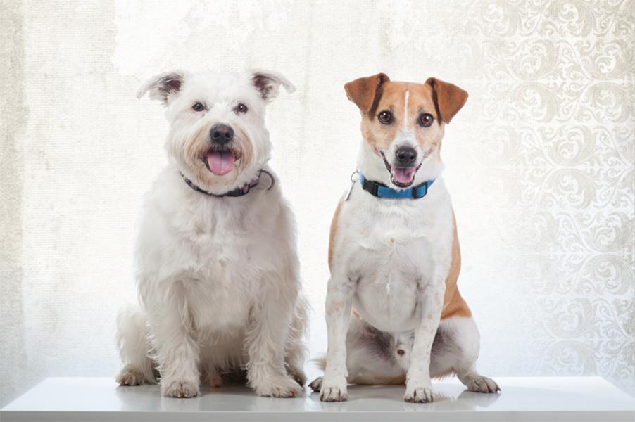 Hundeportraits_2011-2807