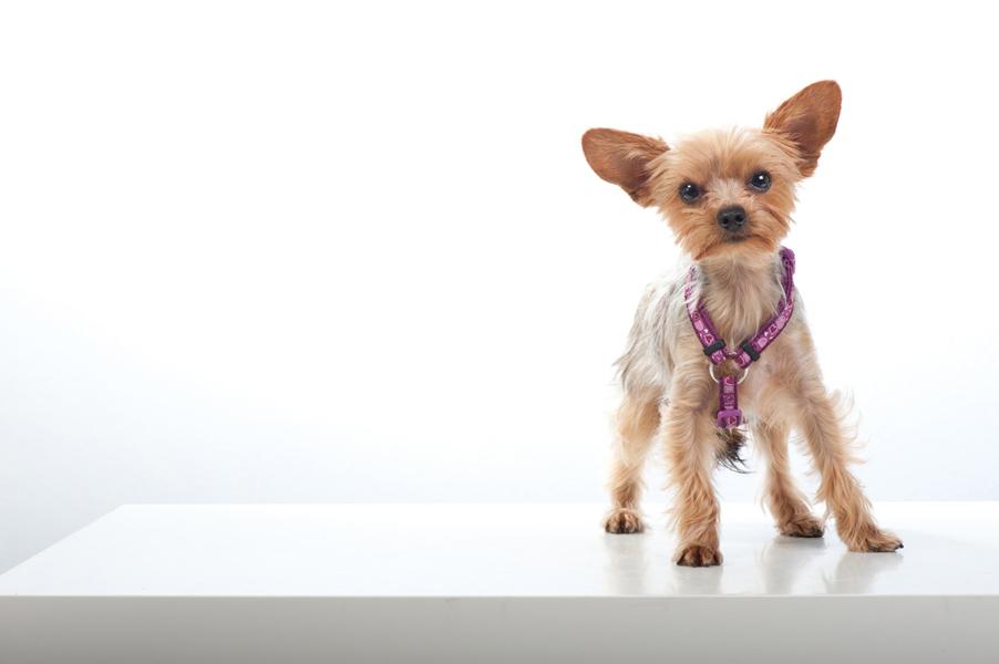 Hundeportraits_2011-2830 Kopie